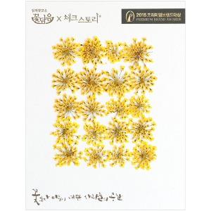 압화/꽃송이 레이스플라워 - 옐로우 20송이