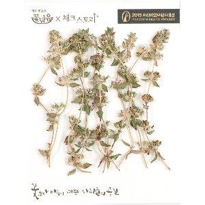 압화/줄기꽃 자연풀줄기 - (10개)