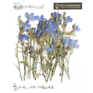 압화/줄기꽃 로베리아 - 블루(20개)