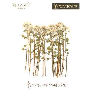 압화/줄기꽃 물망초줄기 - 화이트(20개)