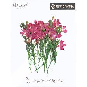 압화/줄기꽃 로베리아 - 핑크(20개)