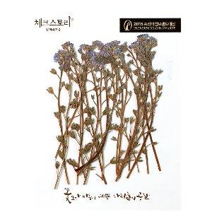압화/줄기꽃 물망초줄기 - 블루(20개)